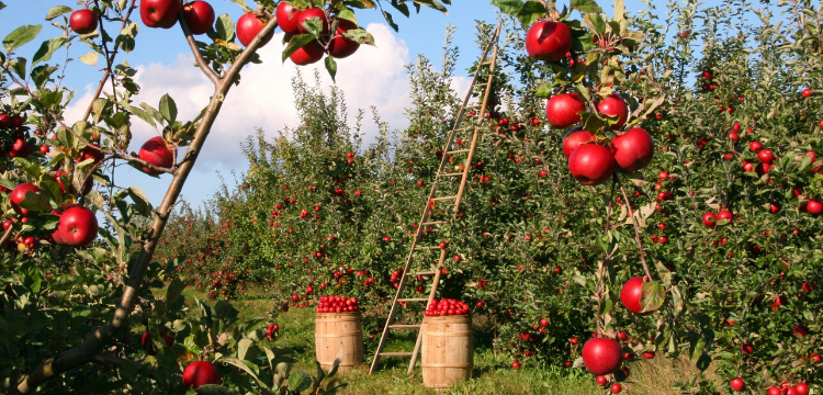Apple Farms in the Hudson Valley NY