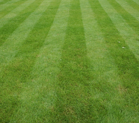 Fresh cut striped lawn , green lawn grass, kehoe kustom orange county NY